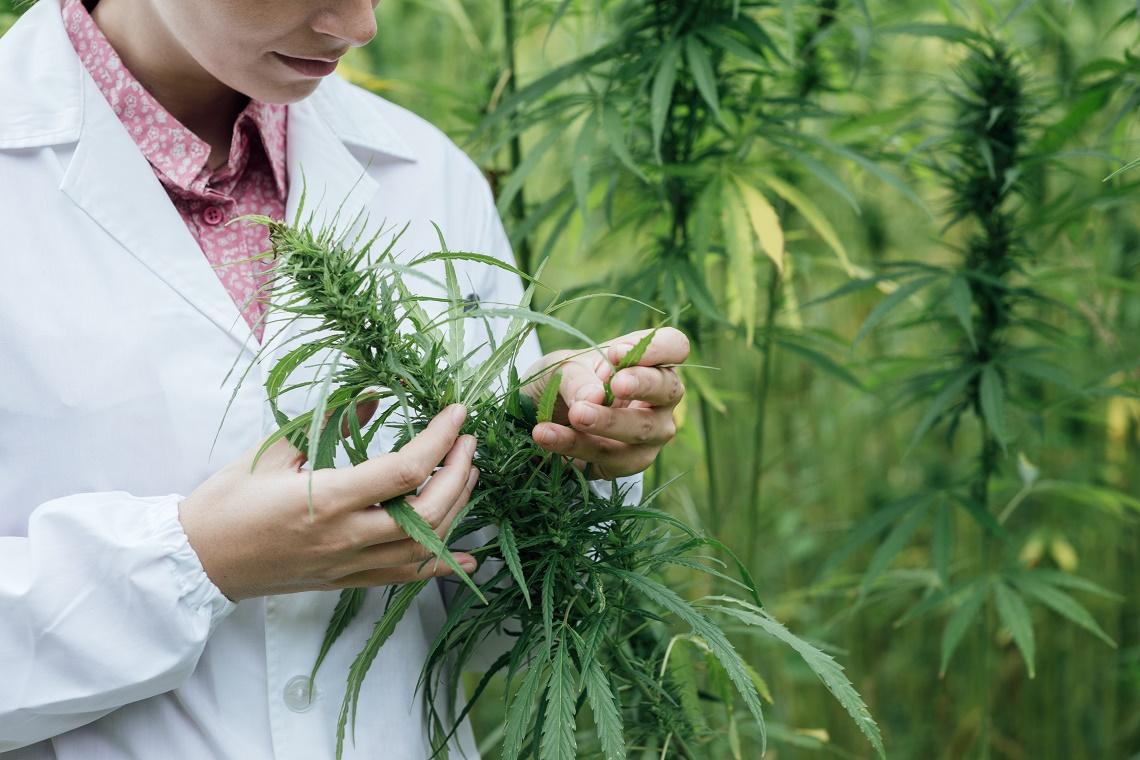 A Short Discussion About Medicinal Marijuana